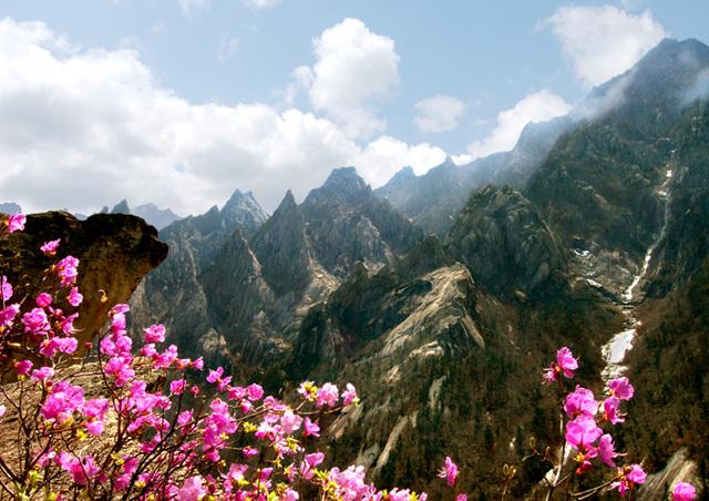 선하계곡의 봄.jpg
