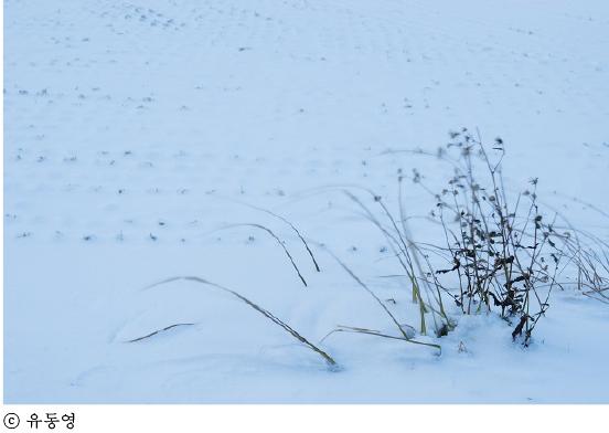 따뜻한 슬픔3 사진-1a (1).jpg