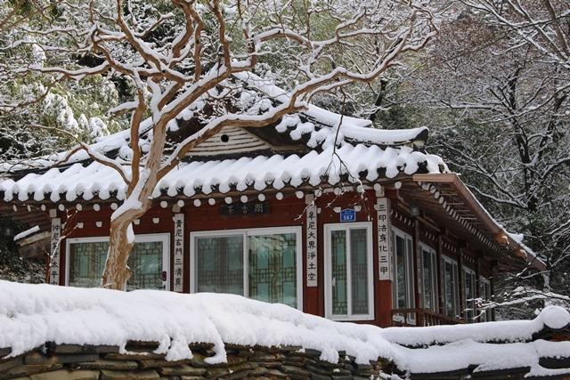 갑사의 사계-겨울 17-15.jpg