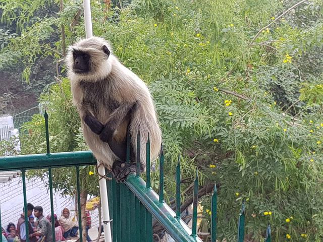 전정각산에 살고 있는 원숭이.jpg