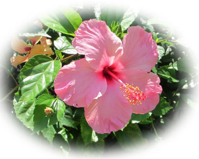 대만 꽃.PNG