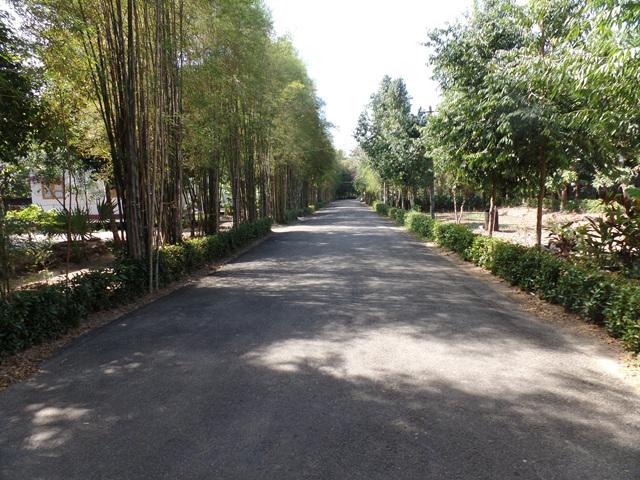 담마마마까 수행센터의 산책길. 이 길은 걸음수행을 위한 최적의 공간이기도 하다..jpg